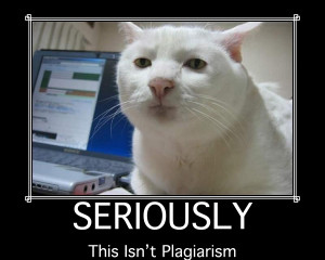A picture of Serious Cat, a white cat who appears to be wearing a very serious expression, with the caption: 'SERIOUSLY: This isn't plagiarism.'